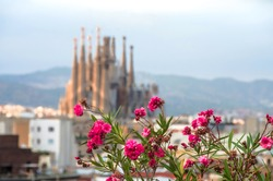 Sagrada Familia in Barcelona. Sagrada with bloor effect at spring time with flowers background