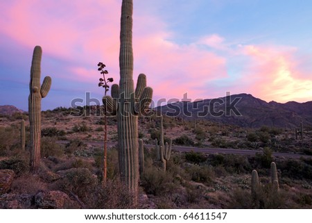 Saguaro and Agave  catching days last light on Apache Trail.