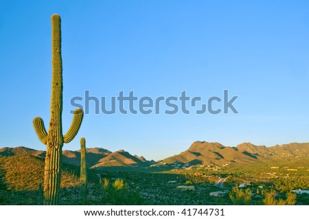saguaro cactus and tucson valley in arizona desert
