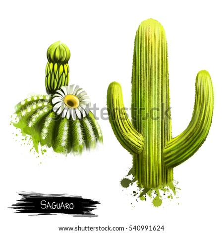 saguaro fruit with flower...