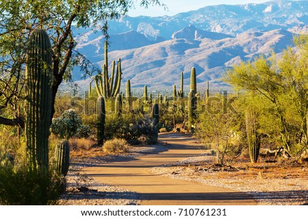 Saguaro National Park #710761231