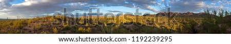 Saguaro National Park American Southwest Sonoran Desert Panorama