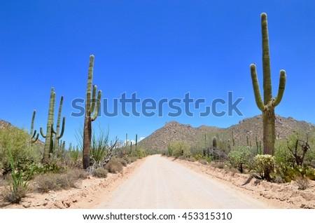 saguaro national park  arizona  ...