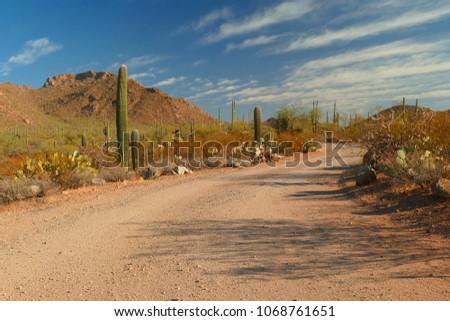 Saguaro National Park road near Tucson, Arizona