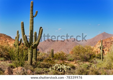 Saguaro, ocotillo and the mountains of the Tonto National Forest, Arizona