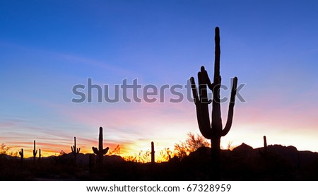 Saguaro silhouette at sunset, in red blue sky.