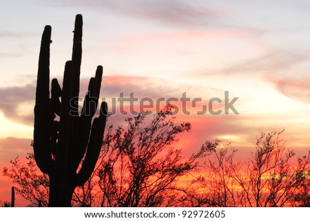 Saguaro silhouette in fiery Sonoran Desert sunset lit sky - stock photo