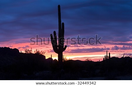Saguaro silhouette sunset lit red and blue sky.