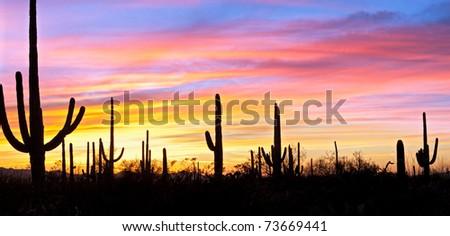 Saguaro silhouetten in Sonoran Desert sunset lit sky.