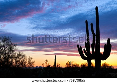 Saguaro silhouetten in Sonoran Desert sunset lit sky. - stock photo