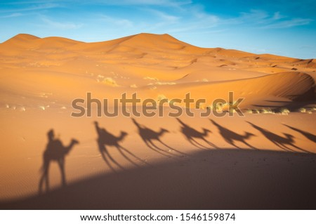 Sahara desert camels trekking tours with berbers in Merzouga adventure dromadaires riding and berber guiding excursion
