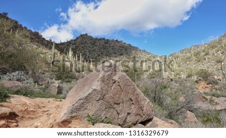 Sahuaro Cactus in Arizona Desert