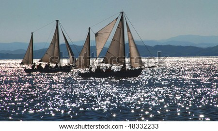 Sailboats, sail regatta, Vladivostok, Russia