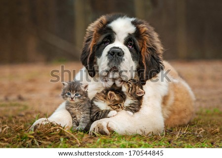Saint bernard puppy with three little kittens #170544845