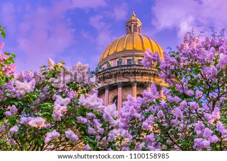 Saint Isaac's Cathedral. Saint Petersburg. Museums of St. Petersburg. Architecture of Russia. St. Isaac's Cathedral in flowers. Summer view of Petersburg. Lilac.