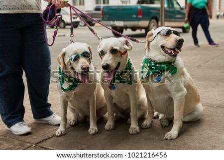 Saint Patrick's Day Dogs