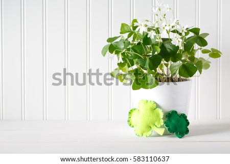 Saint Patrick's Day shamrock in white pot