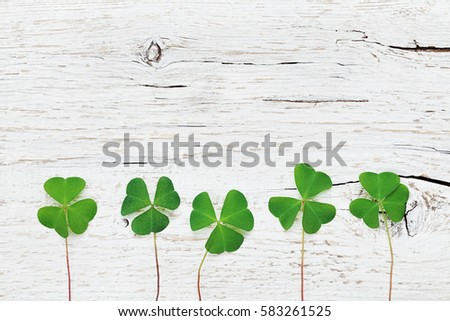 Saint Patricks Day background with green shamrock on white rustic texture top view.