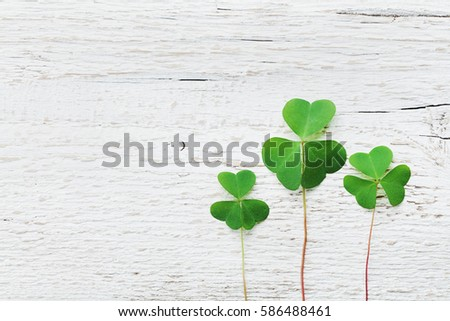 Saint Patricks Day background with green shamrock on white texture top view.