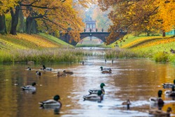 Saint Petersburg, Autumn Park, Golden leaves by the trees, Pushkin, Russia. St Petersburg in the autumn, Nature of Russia.