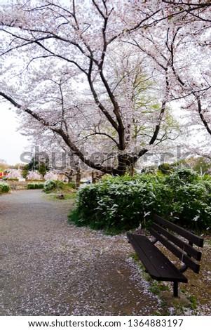 saitama japan sakura season