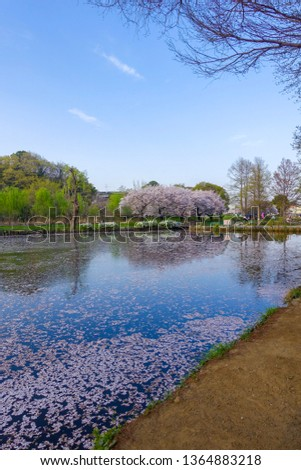 saitama japan sakura season  #1364883218