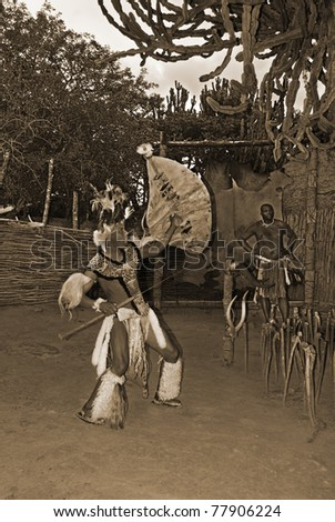 man wears traditional Zulu clothing, during presentation of a Zulu ...