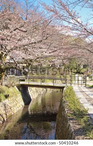 Sakura (Cherry blossom) at the Philosopher's Path - March 2010, Kyoto - Japan