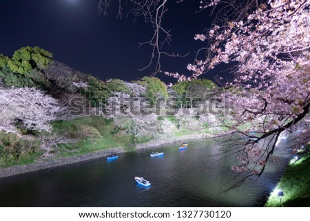 Sakura (cherry blossom) light up at famous outdoor park, Chidorigafuchi at Tokyo, Japan. Boat activity along the river is one of the popular leisure during this season.  #1327730120