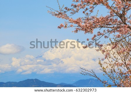 Sakura cherry blossom with background of mount Fuji landscape at