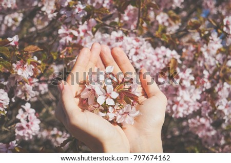 Sakura flowers in his hands. Spring the cherry blossoms. Vintage #797674162
