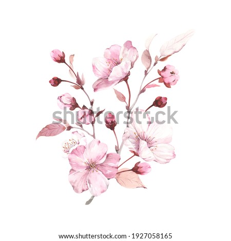 Sakura on branches tree. Watercolor illustration blossoming cherry isolated on white background, design element, romantic symbol spring.