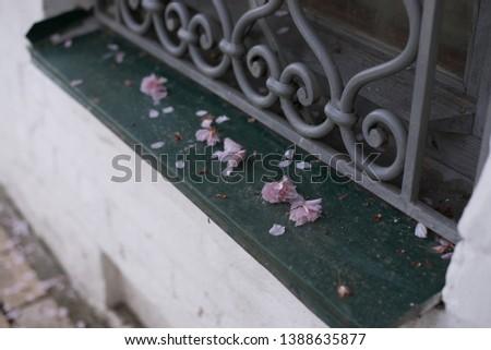 Sakura petals and fallen flowers on the windowsill outside