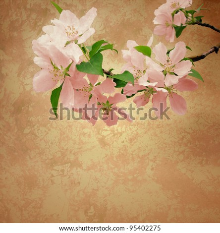 sakura  pink flowers blossoming tree branch on old paper background
