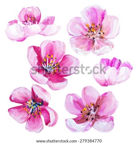 Sakura spring flowers isolated on white. Oil painting