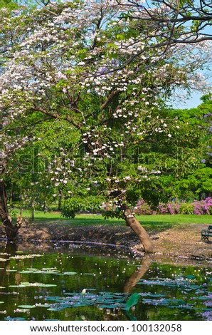 Sakura tree is falling in the pond because the bank is collapsing - stock photo