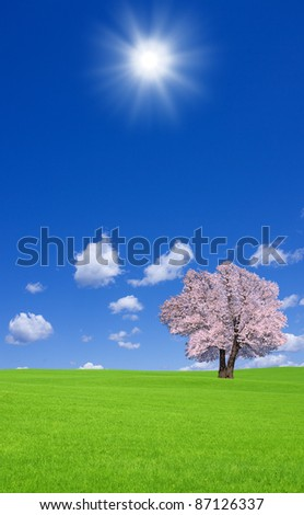 Sakura tree on the green hill.