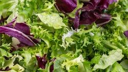 Salad background, freshness green salad leaves of frisee, romaine salad, radicchio, food banner