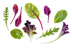 Salad leaves Collection. Isolated Mixed Salad leaves with Spinach, Chard, lettuce, rucola on white background. Flat lay