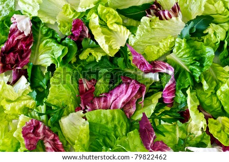 Salad leaves with lettuce, radicchio, and rocket as a background