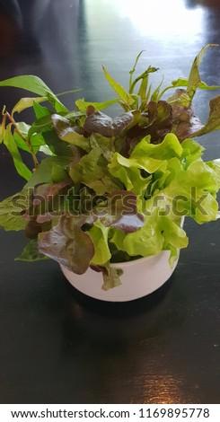 Salad Vegetable,Vegetable,Hydroponic vegetable #1169895778