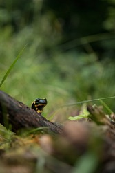 Salamander in the woods in natural light