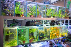 Sale of aquarian small fishes in pet-shop. A big show-window with aquariums in poultry market