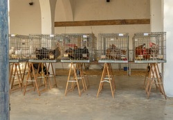 Sale of poultry, hens and roosters, caged on tables. Weekly street market in the Majorcan town of Sineu