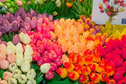 Sale of tulips in Amsterdam airport Schiphol