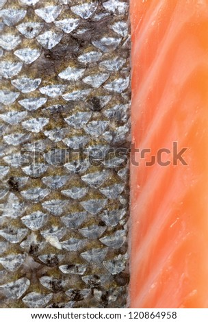 salmon fish scales on white