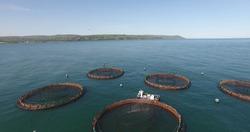 Salmon nets at Glenariff Co Antrim Northern Ireland