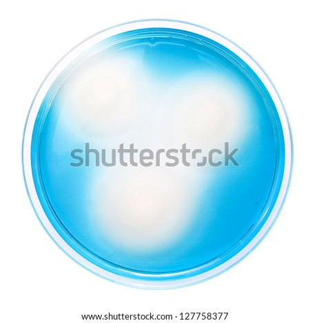 Salmonella colonies on MSRV agar plate, isolated on white.