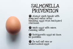 salmonella prevention from eggs infographic typography