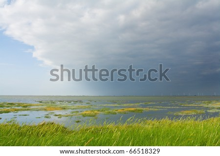 Salt marsh of Nordfriesland, Germany